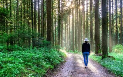 The How-to of Contemplative Hiking